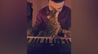 VIDEO. Quand «Lalaland» rencontre «Les Aristochats»