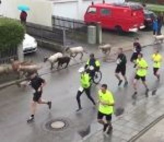 Des moutons s'incrustent dans une course à pied (Wings for Life World Run de Munich)