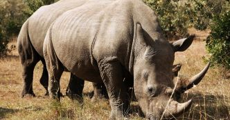 Drones will watch over endangered wildlife to warn about potential poachers
