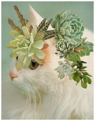 Cats & Plants, pas de Photoshop pour les chats de Stephen Eichhorn !