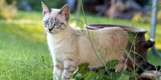 Vermifuge pour chat : pourquoi, quand, comment vermifuger son animal ?