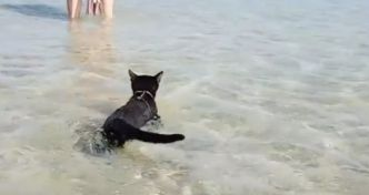 Un chat s'éclate à la plage