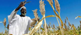 Innovation : l'agritech pour bouleverser l'agriculture africaine