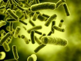 Zéro éosinophiles, un signe de gravité de l'infection à C. difficile