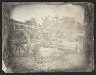 Which early master of photography made the first image of a living animal?