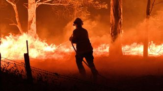 franceinfo junior. Pourquoi il y a des incendies en Australie ?
