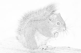 Squirrel in wood coloring page - Mimi Panda